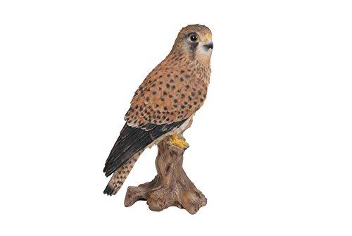 Kleiner Gartenvogel - Kestrel auf Baumstamm